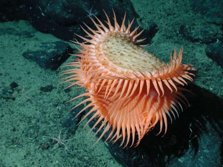 animais marinhos - anêmonas
