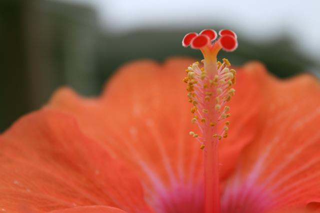 flores que gostam de sol hibisco