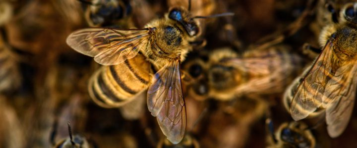 Abelhas: 14 curiosidades sobre esses insetos incríveis