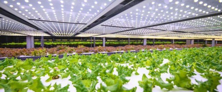 Fazenda vertical na Dinamarca vai produzir mil toneladas de verdura por ano
